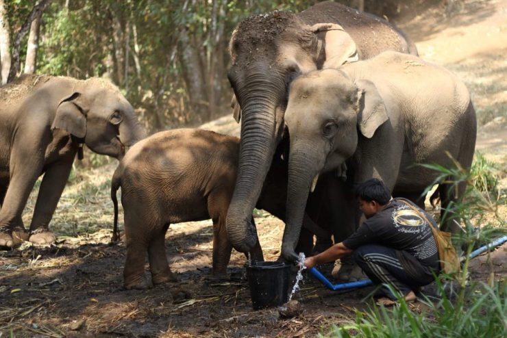 Fifty Elephants in Need of Support