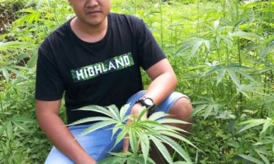 Grow, Marijuana, Thailand