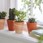 Aesthetic Indoor Home Decor Ideas Using Succulents Market