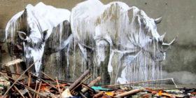 graffiti_rinoceronte-destacado