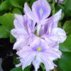 Una flor de mi casa: HCM