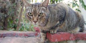 Zapata, mi gato. Foto: NCCV