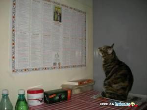 se_uita_ca_pisica_in_calendar_cand_este_dezlegare_la_peste