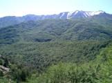 La forêt de Vizzavona