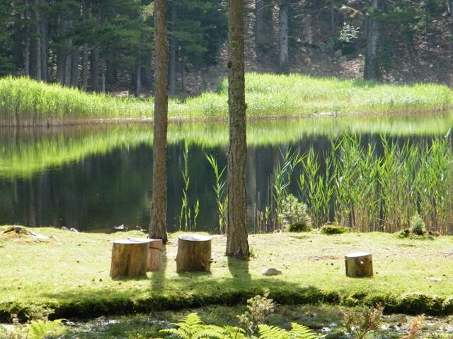 Petits rondins au bord du lac