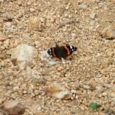 Un petit papillon qui passait par là