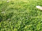 L'herbe est bien touffue là-haut.