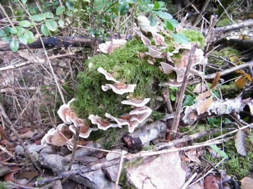Trois champignons...