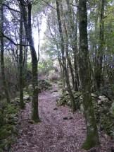 Le sentier entre les arbres