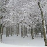 Forêt de Vizzavona.