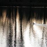 Les étangs de Vers le petit