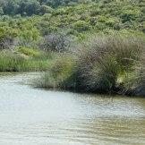 La rivière de l'Ostriconi qui se jette dans la mer à cet endroit.