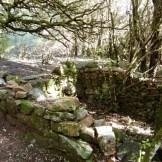 Des ruines de bergerie?