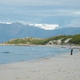 Un tronc seul au milieu de la plage