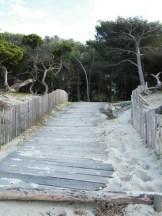 Ce chemin mène à la pinède