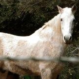 Un cheval du centre équestre de Chjosu