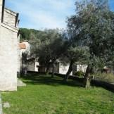 Des oliviers à côté de l'église