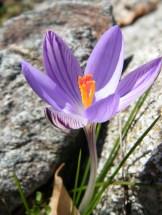 Une jolie fleur comme d'habitude