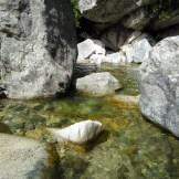 Un point d'eau près de la cascade