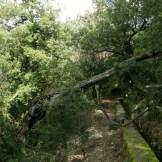Sur le retour, un arbre est tombé sur le chemin :s