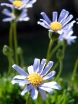 Les fleurs du jardin