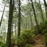Retour sous les pins