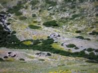 Ruines de bergeries