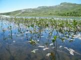 Des plantes dans le lac
