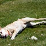 Un des chiens de Lisa semble apprécier l'endroit