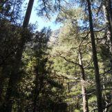 et passages sous les arbres.