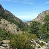 La forêt de Bonifatu