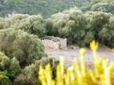 Une bergerie en ruines au loin