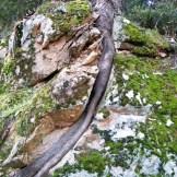 Un arbre qui a poussé dans un rocher
