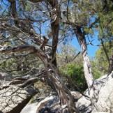 Les arbres poussent dans les rochers