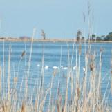 Vue sur l'étang et des flamants
