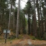Dans la forêt de Vizzavona
