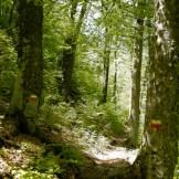 Retour dans les bois