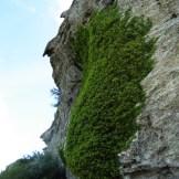 A pietra Ellerata