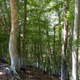 Dans les bois de Bastelica
