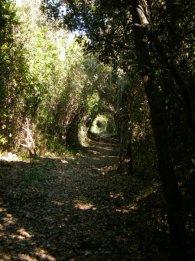 Tunnel de végétation