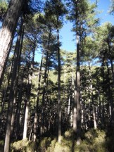 Dans la forêt de Bonifatu