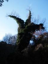 Un arbre étrange sur le sentier