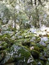 Ruines de l'enceinte préhistorique