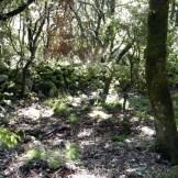 Ruines préhistoriques