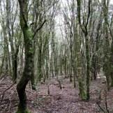 Au retour, on s'invente un chemin dans la forêt