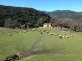 Un champ avec des moutons