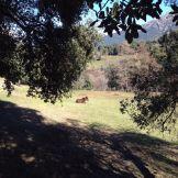 Un cheval dans un champ