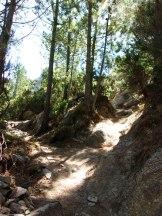 Sous les pins