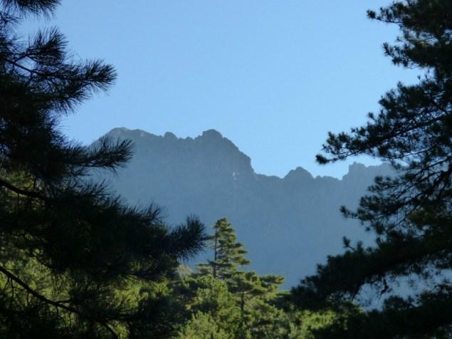Les montagnes à travers les pins de Cervellu