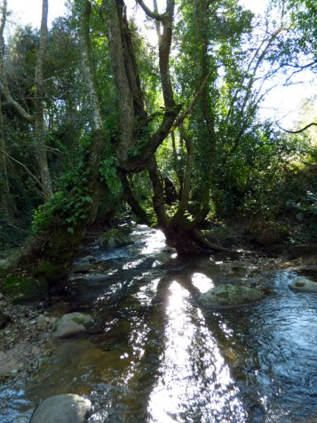 On traverse le ruisseau de Fiumicellu